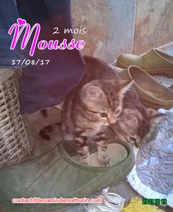MOUSSE 02