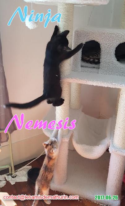 Ninja et Nemesis 02