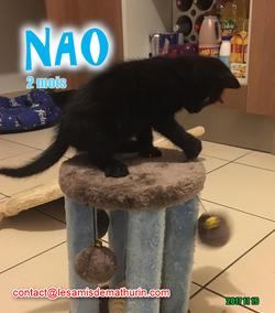 NAO 03