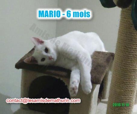 MARIO modif 04