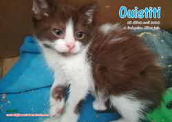 OUISTITI 01