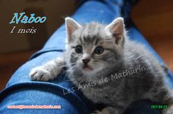 Naboo 04