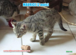 MAURICE modif 01