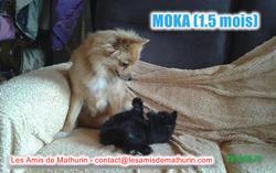 MOKA avec la chienne de la FA 2