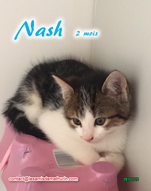 NASH 04