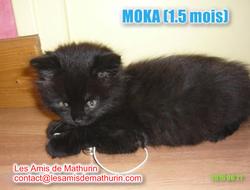 Moka 4