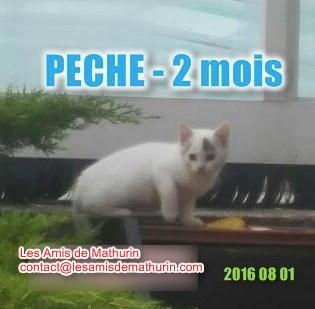 PECHE 1 modif