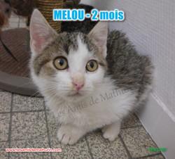 MELOU 07
