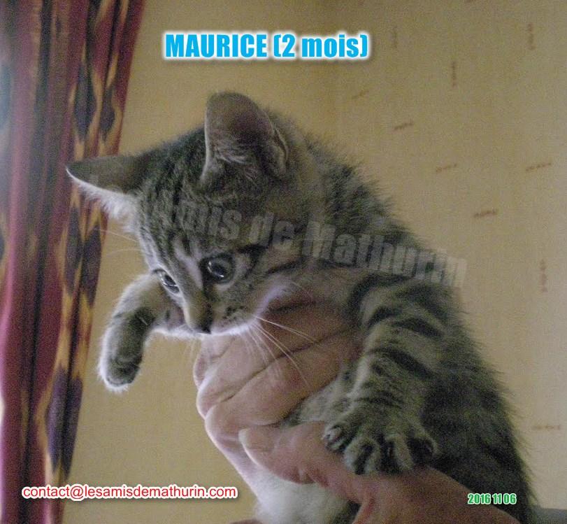 MAURICE modif 02