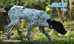 MEZZO 03