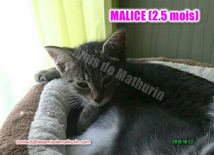 Malice 04