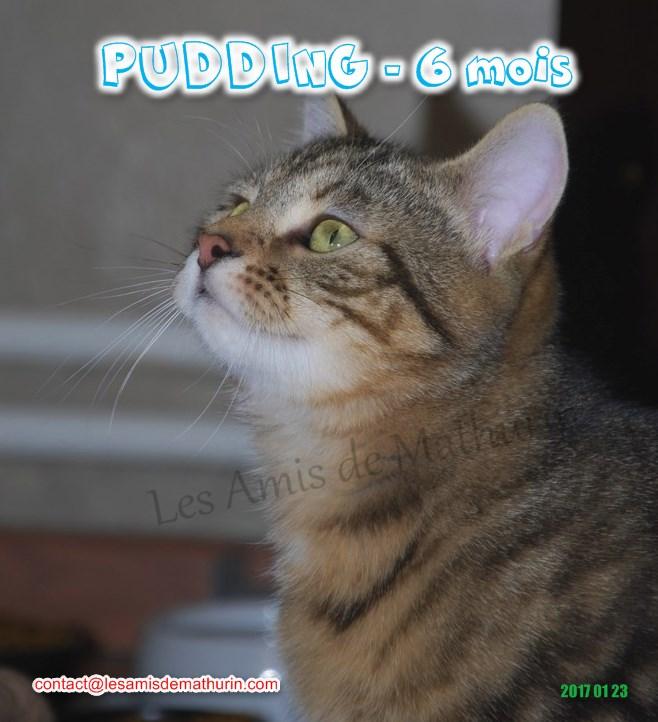 PUDDING 04