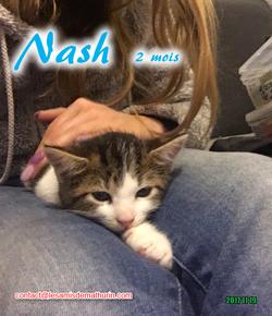 NASH 05