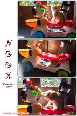 NOOX 05