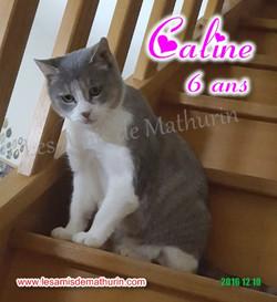 CALINE modif 13
