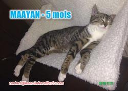 MAAYAN modif 02