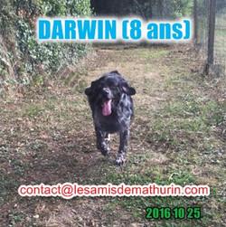 DARWIN octobre 02