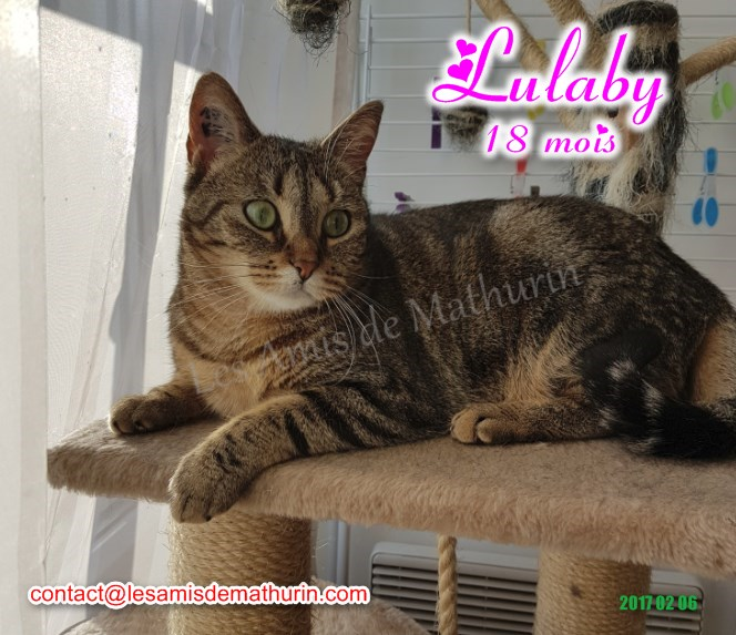 LULABY 04