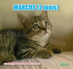 MARCUS modif 01