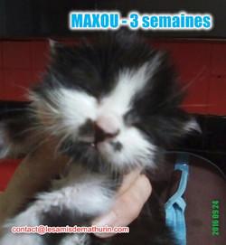 MAXOU_1_modifié