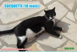 Socquette Modif2