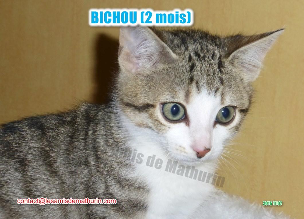 BICHOU modif 10