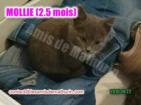 MOLLIE 02
