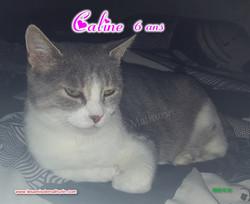 CALINE modif 07