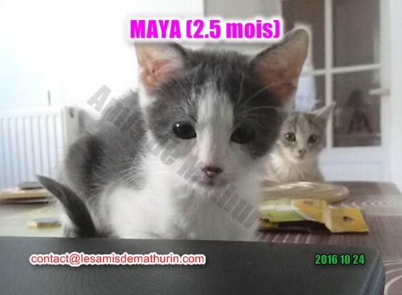 maya villecresnes 01