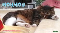 MOUMOU 01