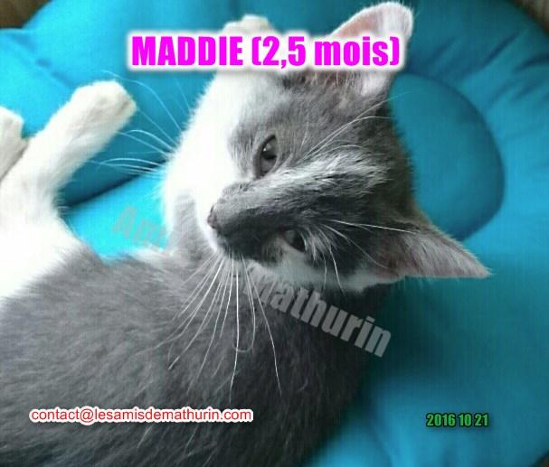 Maddie 4