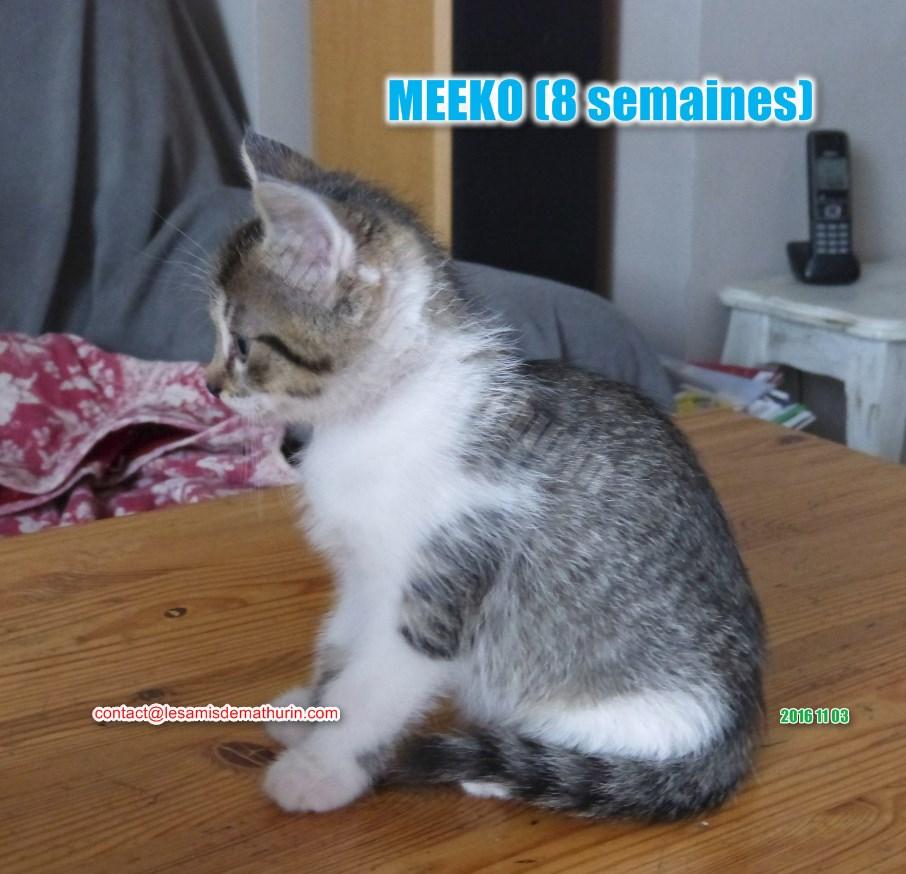 MEEKO modif 03