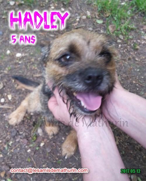 HADLEY mai 08