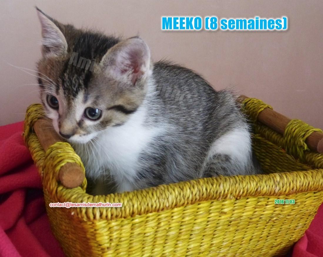 MEEKO modif 01