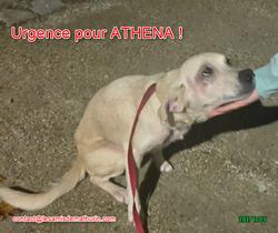 ATHENA 07