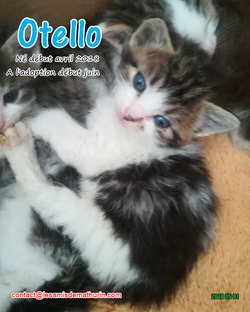 OTELLO 01