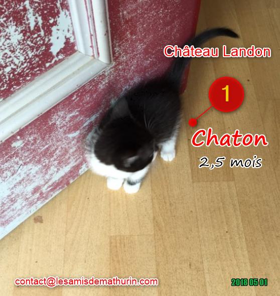 Chaton 01
