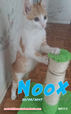 NOOX 02