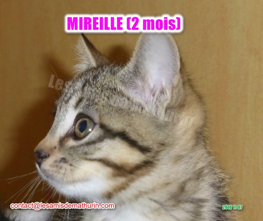 MIREILLE modif 08