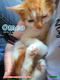 OMEO 03