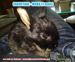 MOKA le petit lapin 2016 09 08 bis
