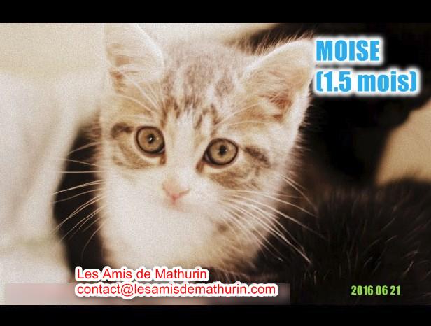 MOISE 2
