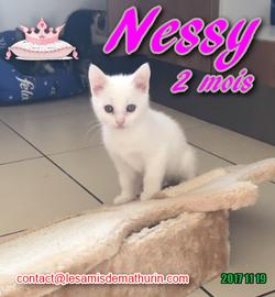 NESSY 03