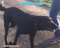 DARKOS LAM 02