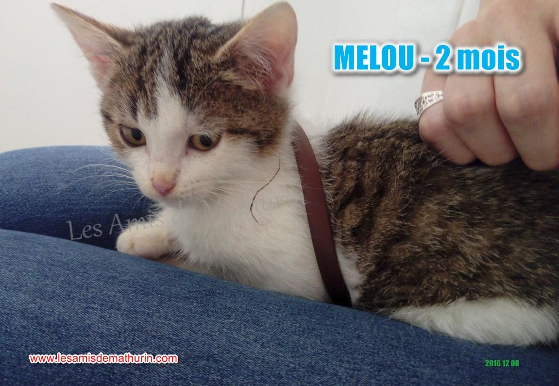 MELOU 02
