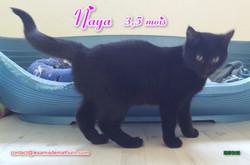 NAYA 04