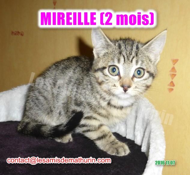 MIREILLE modif 01