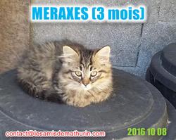 MERAXESmodif1