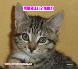MIREILLE modif 09