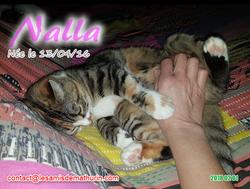 NALLA 03